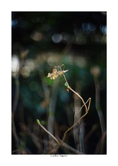 2019/3/9 - 2/21 photo by shin ikegami. - Lomography New Jupiter 3+ 1.5/50 L39/M (shin ikegami) Tags: sony ilce7m2 sonyilce7m2 a7ii 50mm lomography lomoartlens newjupiter3 tokyo sonycamera photo photographer 単焦点 iso800 ndfilter light shadow 自然 nature 玉ボケ bokeh depthoffield naturephotography art photography japan earth asia
