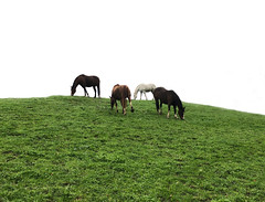 out together (Rosmarie Voegtli) Tags: horses hill lowpow quartett 4 grass meadow dornach morningwalk iphone