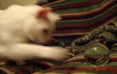 Cat Blur. (dccradio) Tags: lumberton nc northcarolina robesoncounty indoor indoors inside lensball crystalball ball glassball striped stripe stripes blanket fleece blurry blurred blur action motion cat movement feline meow furry domesticcat housecat pet animal sony cybershot dscw230