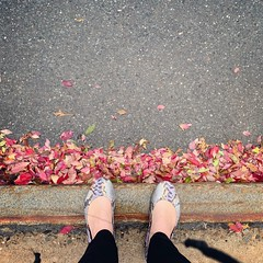 Snakeskin on a Rainy Day. www.jessica365.com (Jessica Brookes-Parkhill) Tags: lookdown fromwhereistand tieks snakeskin flats shoes wetpavement rain wetleaves leaves autumn fall fallcolors lavender jessica365 rainyday