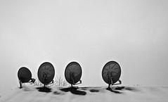 Antennas (ricko) Tags: antennas roof snow television motel dish sonestaessuites bw chesterfield missouri