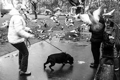 Prague, 2018 (LivBelko) Tags: street streetphoto streetshot streetphotography blackandwhite blackwhite bnw bw story pigeons park