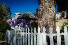 Walking Down the Street (lindayaecker) Tags: blueskies purplehouse walkintheneighborhood whitepicketfence