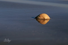 Arrival V (Monika Müthing) Tags: shell sea ocean beach sand waddensea flood blue water tide reflection yellow brown