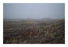 Husby Klit, Denmark, 2019 (csinnbeck) Tags: m10 eosm10 22mm 35mm canon denmark fog mist foggy fields roads road winter february north sea digital landscape jutland westcoast west eosm grass sand field sky dune dunes
