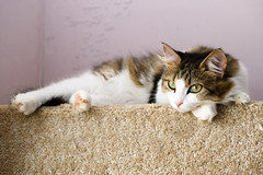 Kitty (petr.petrov) Tags: cat pet kitty domestic animal shelter homeless sad russia eyes cute kitten cats beauty