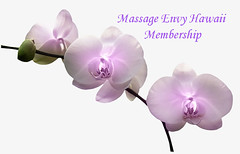 With a Massage Envy Membership you'll enjoy access to monthly services at lower rates and discounts on additional services. <3 https://www.massageenvy.com/membership/ (massageenvyspahawaii) Tags: massageenvyhi kaneohe kapolei pearlcity pearlcityhighlands ainahaina maui membership members health wellness beauty joy happiness massage facials stretomethod couple sports aromatherapy weloveourmembers