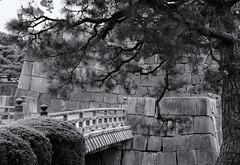 The castle bridge (Tim Ravenscroft) Tags: bridge castle traditional nijo kyoto tree pine architecture hasselblad hasselbladx1d japan monochrome blackandwhite blackwhite