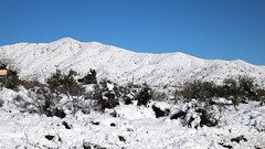 tonto-national-forest-1902230336 (nagerfran) Tags: cactus winter desert storm snow cold freeze arizona scottsdale tontonationalforest