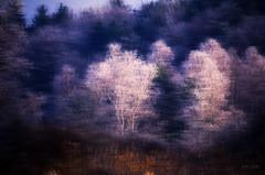 Dreams of Winter Trees... (Ody on the mount) Tags: abstrakt anlässe bäume diadigitalisierung fototour kunst landschaft nikon pflanzen testdias winter abstract art landscape mediadig trees