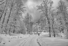 Goč (Djordje Petrovic) Tags: serbia srbija vrnjackabanja goč mountain snow winter nikon nikond80 tokina tokina1224mm monochrom blackandwhite bw