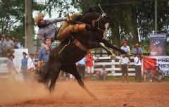 Willian e Pelagraia da Furacão (Eduardo Amorim) Tags: gaúcho gaúchos gaucho gauchos cavalos caballos horses chevaux cavalli pferde caballo horse cheval cavallo pferd pampa campanha fronteira quaraí riograndedosul brésil brasil sudamérica südamerika suramérica américadosul southamerica amériquedusud americameridionale américadelsur americadelsud cavalo 馬 حصان 马 лошадь ঘোড়া 말 סוס ม้า häst hest hevonen άλογο brazil eduardoamorim gineteada jineteada