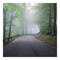 Hazy Road II - Fuji Reala 100 exp* (magnus.joensson) Tags: sweden swedish skåne autumn fog road haze october rolleiflex carl zeiss tessar 75mm fuji reala 100 exp 6x6 medium format c41