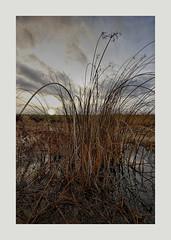 Sunet Waterdonken Breda B1 (cees van gastel) Tags: ceesvangastel canoneos550d clouds sigma1020mm landscape landschap luchten natuur nature nederland netherlands noordbrabant breda water winter waterdonkenbreda waterakkers wolken horizon einder sunset zonsondergang