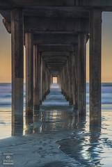 Scripps Pier at Sunrise (HansenPrime) Tags: scripps scrippspier pier sunrise reflection morning beach sand water ocean pacific lajolla california sky landscape tide waves nature colorful