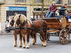 Tres Tombs de Barcelona 2019 (55) (Ismael March) Tags: barcelona trestombs trestombsdebarcelona santantoni sanantón