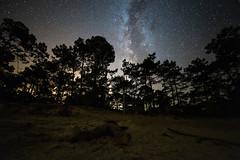 Bronzette sous la Voie lactée (Olivier 38) Tags: nightscape paysage de nuit astrophotographie astrophotography night star milky way voie lactée sky ciel etoile
