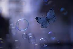 The flutter of a butterfly// El aleteo de una mariposa (Mireia B. L.) Tags: seasons2019mydairy butterfly mariposa bubbles burbujas efectomariposa butterflyeffect helios442 helios58mmf2 vintagelens vintagebokeh sonya7 fly volar
