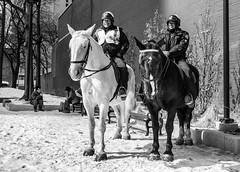 Hoofed pause (on the beat). (Nance Fleming) Tags: winter2019 streetscene onthestreet toronto torontopolice horse equine uniform