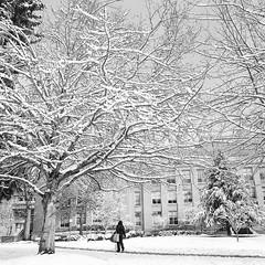 Let it Snow (Aaron Bieleck) Tags: hasselblad500cm 120film analog 6x6 square film filmisnotdead hasselblad mediumformat wlvf snow winter portland ohsu oregonhealthandsciencesuniversity tree 60mmct blackandwhite oregon
