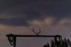 Horns and Stars (insaneshow) Tags: stars horns clouds night wisconsin astro astrophotography spring pines trees dark moonless ranch farm