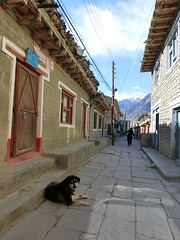 Walking in Jomsom (kawabek) Tags: nepal ネパール jomsom ジョムソン dog animal 犬 イヌ 動物