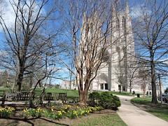 DSCN5728 (littlereview) Tags: dc littlereview 2019 nationalcathedral church flower garden spring blog