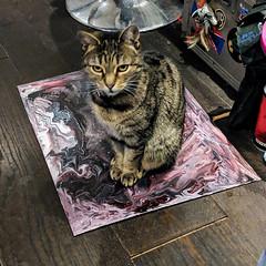 Judgement Day (id-iom) Tags: cat manx manxcat art paintpouring judgementday judgement
