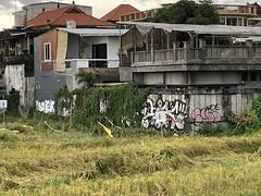 Graffiti bali #soleprost #graffitibali #baligraffiti #indonesia #solegraffiti #graffiticanggu #graffiti (Streetart Bali) Tags: soleprost graffitibali baligraffiti indonesia solegraffiti graffiticanggu graffiti