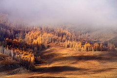 Altay's autumn (alvytsk) Tags: russia siberia altay autumn fog foggy trees yellow landscape