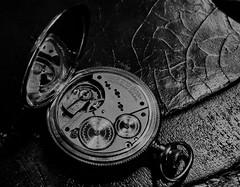 American Waltham Movement (thestingymuffinman) Tags: americanwaltham pocketwatch movement gears staff balance fast slow time tick ticking pass passage