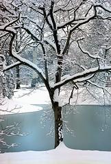 "Cincinnati - Spring Grove Cemetery & Arboretum ""Snow-Capped Branches At Lotus Lake"" (David Paul Ohmer) Tags: cincinnati ohio spring grove cemetery arboretum snow capped branches lotus lake"