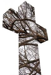 """Cincinnati - Spring Grove Cemetery & Arboretum """"Entanglement"""" (David Paul Ohmer) Tags: cincinnati ohio spring grove cemetery arboretum double exposure branches cross"""