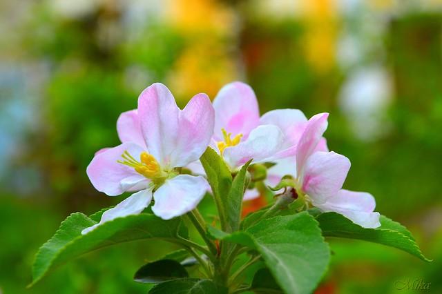 Обои Цветы, Цветочки, Flowers картинки на рабочий стол, раздел цветы - скачать