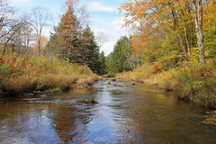 South Branch Tionesta Creek (DavetheHiker) Tags: pennsylvania pa elkcounty alleghenynationalforest anf pennsylvaniawilds pawilds hiking trees nature forest outdoors water creek stream brook tionestacreek tionestacreeksouthbranch fall autumn color