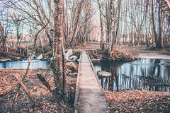 La passerelle. (Un instant.) Tags: river rivière water trees forest poselongue longexposure canon manfrotto paysage nature look france 1855mm février winter
