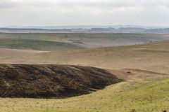 Burnt Down (stevedewey2000) Tags: salisburyplain wiltshire landscape tamron150600 sptacentre spta burnt grassland explore explored