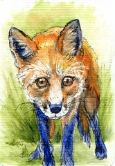 Domesticating the Fox-Postcards for the Lunch Bag (Life Imitates Doodles) Tags: postcardsforthelunchbag postcard fox animal watercolor