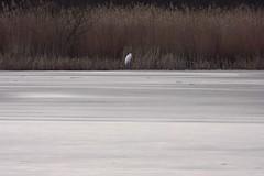preetz_DSC04323 (ghoermann) Tags: deu geo:lat=5419263411 geo:lon=1031333107 geotagged germany schleswigholstein wahlstorf wahlstorfhof lake bird