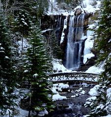 Le gardien veille .. (clairetresse) Tags: torrent chartreuse guiers neige glace pont isère stpierredentremont