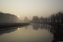 dreaming sunrise (Explored) (Theo Bauhuis) Tags: aalten zonsopgang broek keizersbeek knotwilgen mist tammeldijk water willows sunrise fog pollard stream dreaming morning river