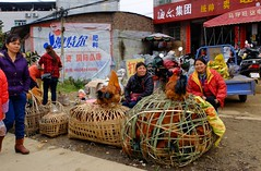 Maping - Fresh Chicken (cnmark) Tags: china guangxi maping street road market chicken roosters cocks markt hähne hähnchen basket korb 中国 广西 马坪 马坪乡 马坪镇 市场 公鸡 ©allrightsreserved