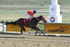 "2017-03-03 (49) r3 Julian Pimentel on #1 Friesani (JLeeFleenor) Tags: photos photography md maryland marylandracing marylandhorseracing equine laurelpark laurelracecourse outside outdoors jockey جُوكِي ""赛马骑师"" jinete ""競馬騎手"" dżokej jocheu คนขี่ม้าแข่ง jóquei žokej kilparatsastaja rennreiter fantino ""경마 기수"" жокей jokey người horses thoroughbreds equestrian cheval cavalo cavallo cavall caballo pferd paard perd hevonen hest hestur cal kon konj beygir capall ceffyl cuddy yarraman faras alogo soos kuda uma pfeerd koin حصان кон 马 häst άλογο סוס घोड़ा 馬 koń лошадь julianpimentel"