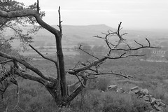 Overseer (Tony Tooth) Tags: nikon d7100 nikkor 35mm f18g tree moors moorland gunhill bw blackandwhite monochrome swythamley staffs staffordshire staffordshiremoorlands countryside