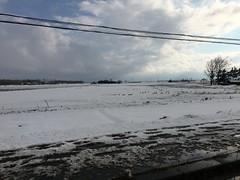 Swans and Ducks in a Snowy Field in Naganuma (sjrankin) Tags: 16march2019 edited naganuma hokkaido japan snow animals birds swans farms fields clouds sky weather ducks