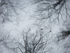 Scary mood, Norway (KronaPhoto) Tags: høst 2018 natur forest motion longexposure trees treescape skyview sky himmel tre branches lines bnw bw nature skog wooden ilovenature norway birds fugler art scary mood dof dofnature