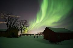 northern lights (jarguel) Tags: aurore aurora northernlights fuji fujixt1 samyang12mm nuit night winter hiver snow neige paysage ciel sky