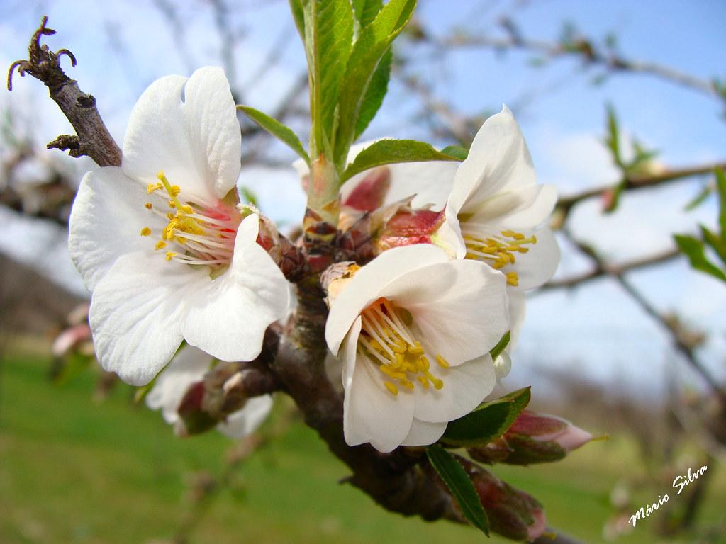 Águas Frias (Chaves) - ... flor de (?) ...