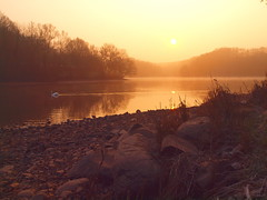 THE SWAN P3240538 (hlh 1960) Tags: swan schwan wasser water steine stones trees bäumer weiher nature natur landschaft landscape pond morning sun sunrise sonne sol soleil atardecer stille ruhe harmony