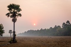 Country (Cédric Fumière) Tags: sun country palmtree asia travel siemreap siemreapprovince cambodia kh